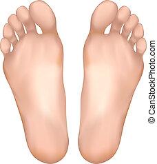 gezonde , feet.