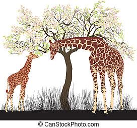 giraffe, boompje
