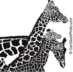 giraffe, hoofden