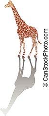 giraffe, schaduw