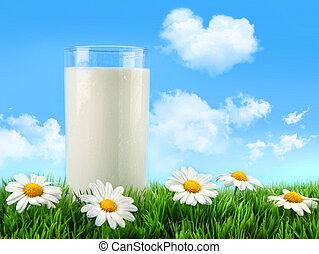 glas, gras, madeliefjes, melk