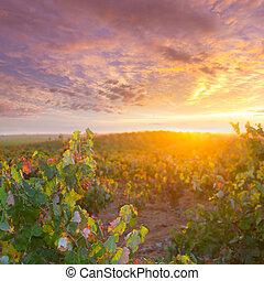 gouden, herfst, wijngaarden, ondergaande zon , utiel, requena, rood