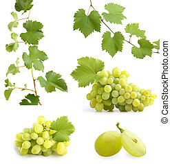 grapevine, collage, bladeren, groene druiven
