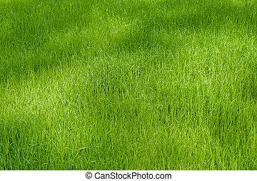 gras, achtergrond, groene