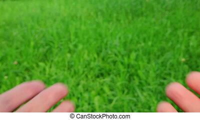 gras, cupped, groene achtergrond, handen, mannelijke
