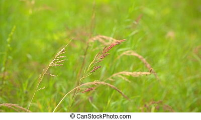 gras, groen rood, achtergrond