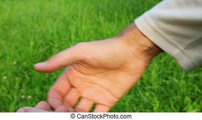 gras, groene achtergrond, gezin, handen