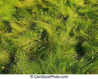 gras, groene achtergrond