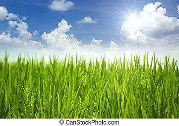 gras, groene, sky.