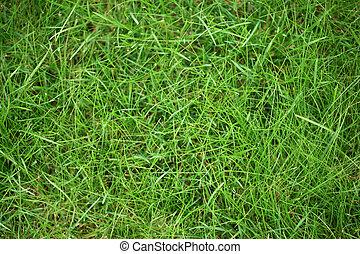 gras, groene, textuur, achtergrond