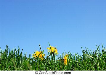 gras, hemel, achtergrond