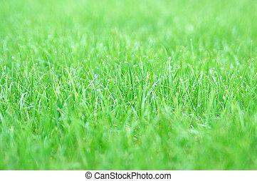 gras, jonge, regen, na