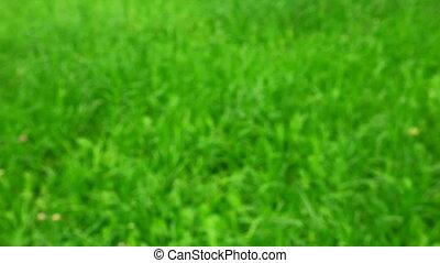 gras, op, groene, duimen, achtergrond, mannelijke