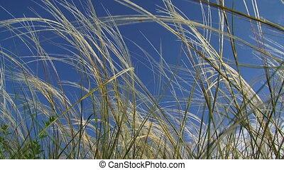 gras, wind