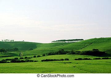 grasland, groene