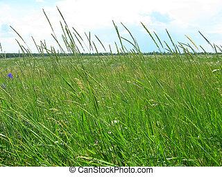grasland, groot, groene