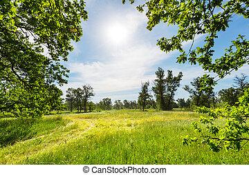 grasland, zomer