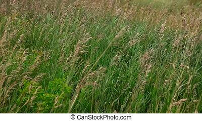 grass., prairie