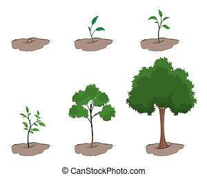 groei, boompje, toneel