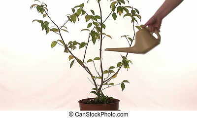 groeiende, boompje, geld