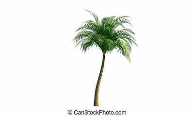 groeiende, palmboom, vaart, alfa