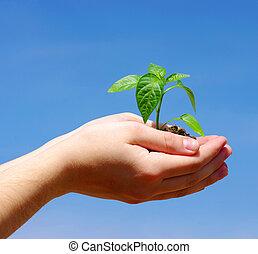 groeiende, plant, groene