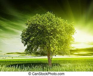 groen boom, natuur