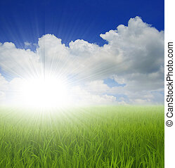 groen gras, hemel