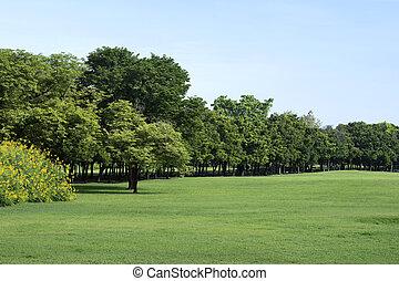 groen gras, park, bomen