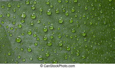 groen water, achtergrond, blad, droplets.