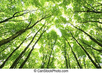 groene bomen, achtergrond