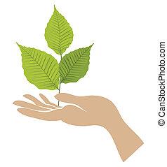 groene, hand., vector, blad