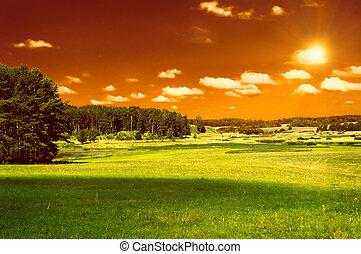 groene hemel, bos, akker, rood
