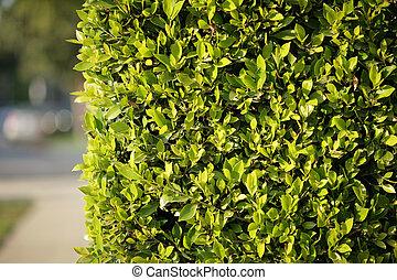 groene, omheining, achtergrond