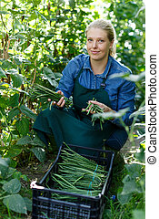 groene, oogst, vrouw, bonen