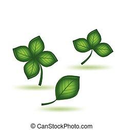 groene, vector, set, leaf.