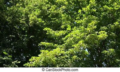 groene, vegetatie