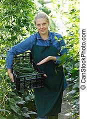 groene, vrouw, bonen, oogst