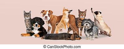 groep, acht, honden, poezen