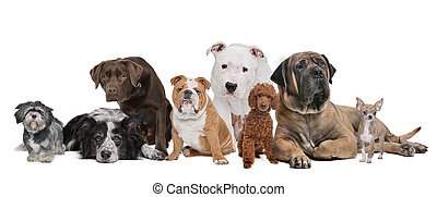 groep, acht, honden