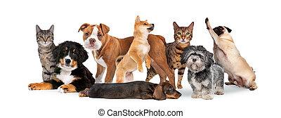 groep, acht, poezen, honden