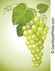 groep, bladeren, druif, groene