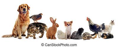 groep, huisdieren