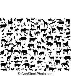 groot, anders, dieren, verzameling