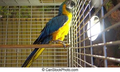 groot, mooi, papegaai