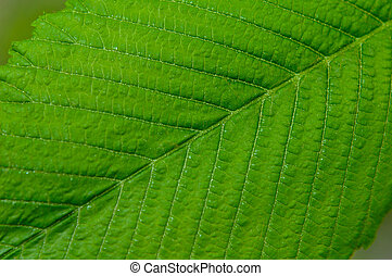 groot, plant, blad, groene, macro