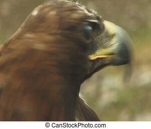 groot, prey., vogel