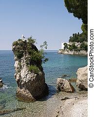 groot, zeemeeuw, rots