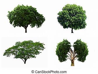 grote boom, vrijstaand, vier, achtergrond., stellen, witte