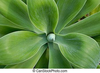 grote verlofen, cactus, close-up